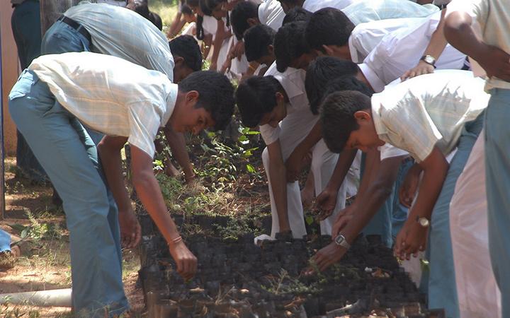Sikeres zöld pályázatok a sportban világszerte – Project Green Hands, India