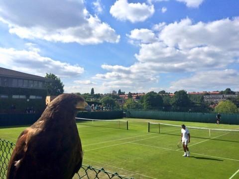 Rufus éppen Rafa Nadal edzését figyeli
